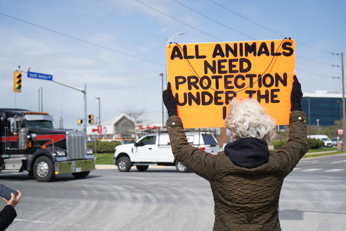 Regan Russell - All Animals Need Protection Under the Law